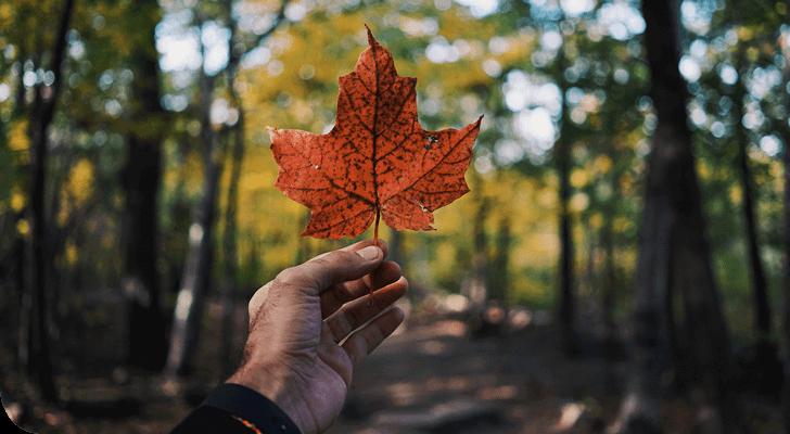 Hever Translations Newsletter: october 2019